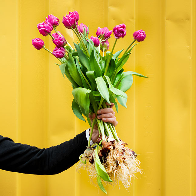 Bouquet of pink tulips on bulb of BOLT Amsterdam