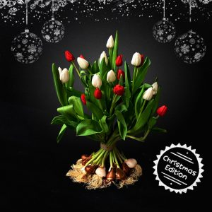 Tulipa Christmas Bouquets - white tulips and red tulips mix bouquet - BOLT Amsterdam