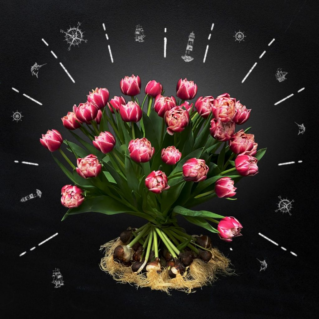 Tulipa Columbus - Salmon pink tulips on bulb bouquet - BOLT Amsterdam - tulips with bulb bouquet pink